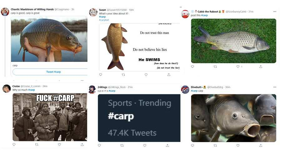 Why is carp trending on twitter